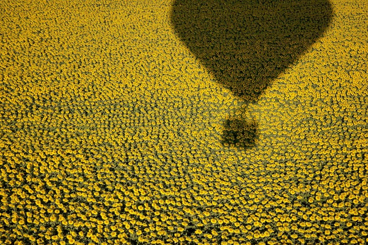 Ballon au-dessus des tournesols